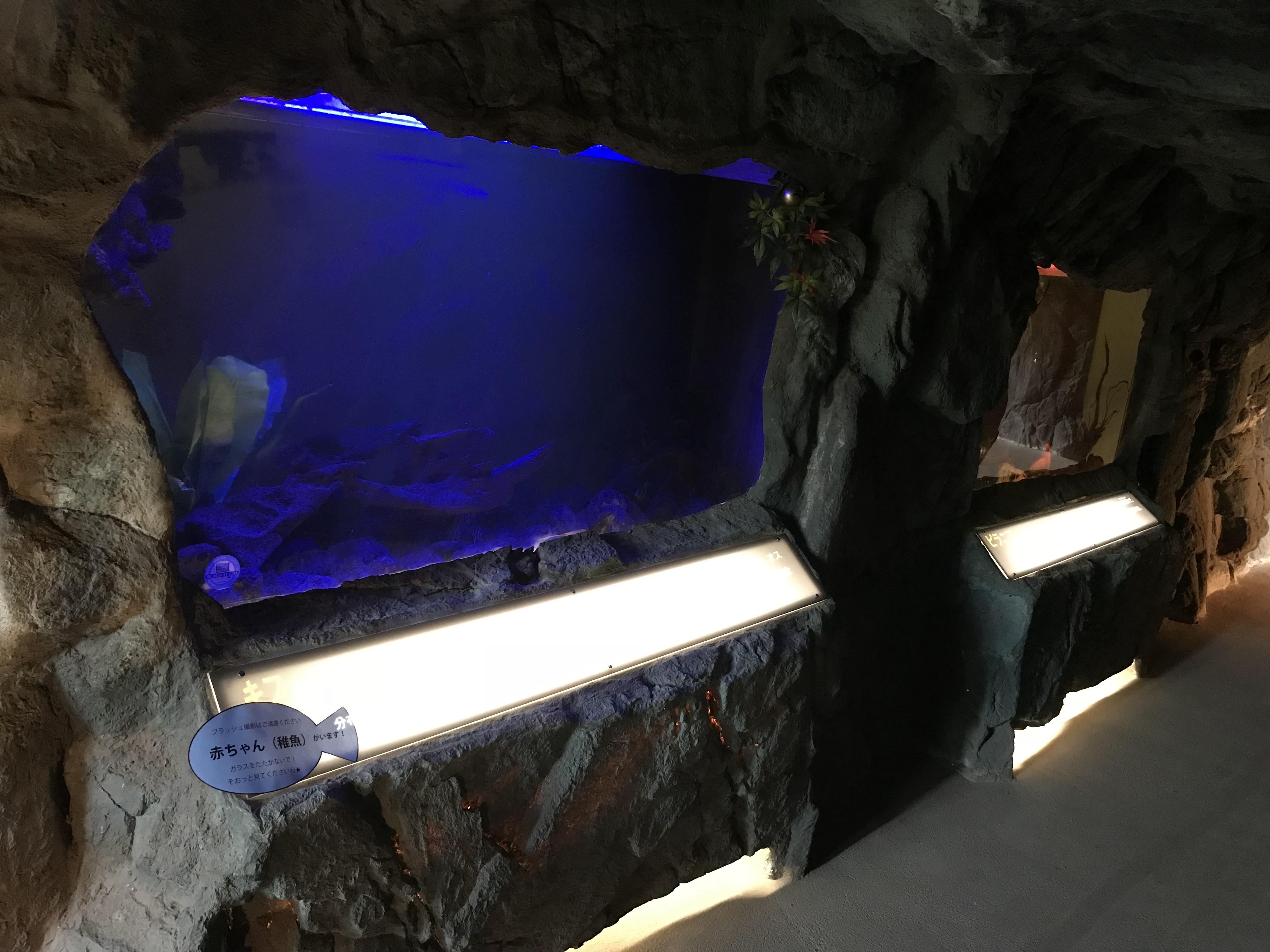 超大型水槽