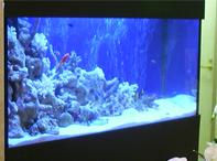 ホーム水族館